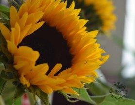 Blumen zum Neuanfang_1