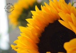 Blumen zum Neuanfang_3