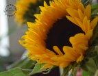 Blumen zum Neuanfang_4